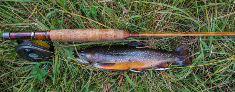 5-weight Fly Rod